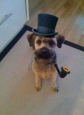 gentleman dog