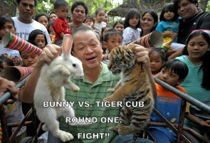bunny vs tiger cub