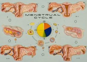 hubbard chart menstrual cycle