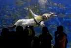 rabbit diver
