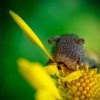slug eyes