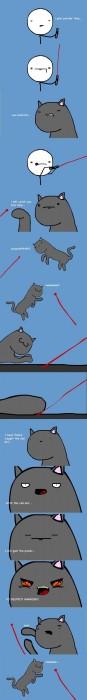 laser pointer cat