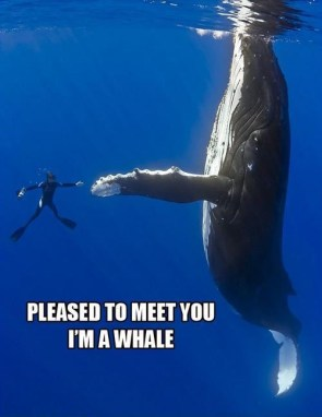 pleased to meet you Im a whale