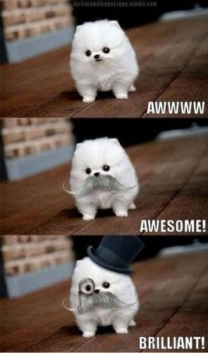 awww awesome brilliant