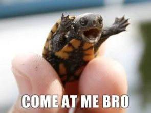 come at me bro – turtle
