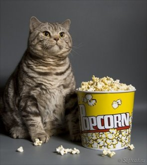 fat cat with popcorn