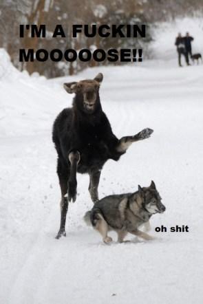 fuckin moose