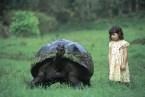 massive turtle