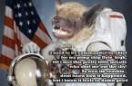 pimp space bat