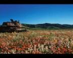 rusty tank in field of flowers
