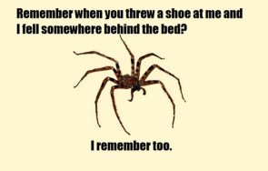 spiders never forget
