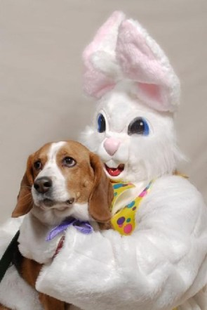 Dog And Bunny