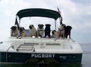 Pug boat
