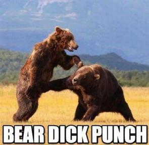 bear dick punch