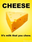 cheese – its milk that you chew