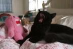 domo kitty