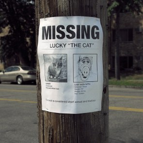 missing – lucky the cat