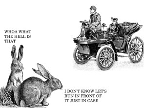 stupid rabbits