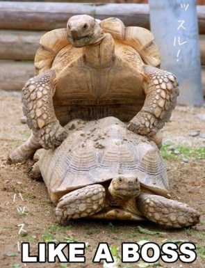 turtle fucking like a boss