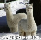 we will munch on your soul