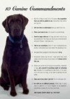 10 canine commandment