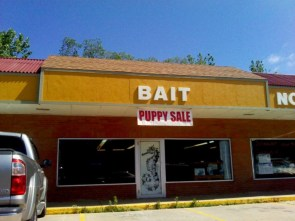 bait – puppy sale