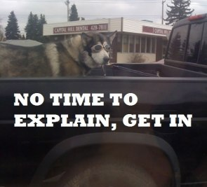no time to explain – get in