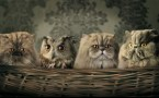 owl cats