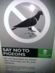 say no to pigeons