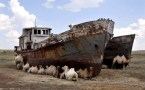 camel boats