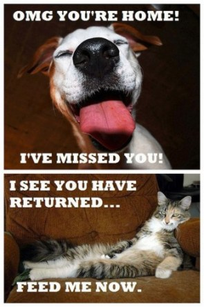 cats vs dogs – when you come home