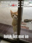 let me out cat
