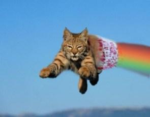 real life nyan cat