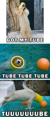 Bear Tube