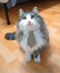 cat in tie