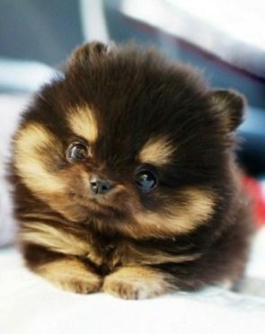 cute puppy eyes