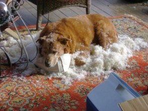 dog vs pillow