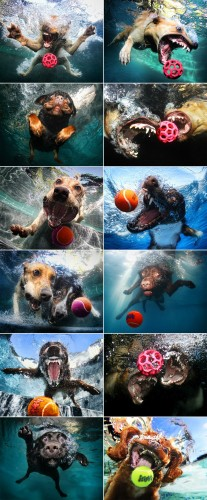 dogs and balls in water