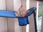 kitten cup holder