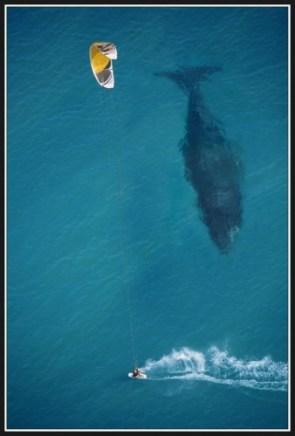 man and whale