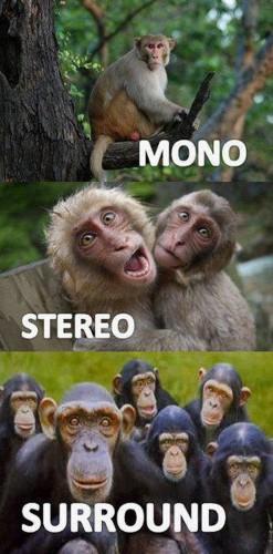 mono – stereo – surround