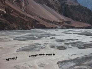 12 camels
