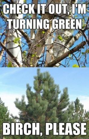Birch, Please