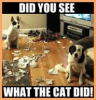 did you see what the cat did