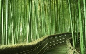 bambo path