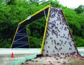crab highway bridge