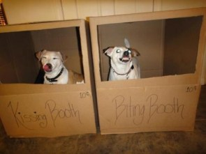 dog booths