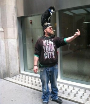 fuck new york city – cat on head