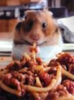 hamster vs spagettti