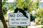 no dogs – no not even little ones